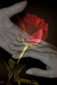 El destino sabe de nuestro amor